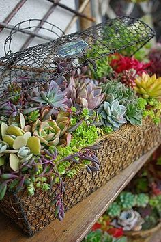 Wire Basket succulent planter