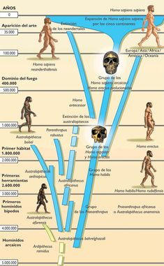 arbol genealogico hominidos - Buscar con Google History Memes, History Facts, Human Evolution Tree, New Scientific Discoveries, Thought Experiment, Archaeological Discoveries, Weird Science, Neuroscience, Homo Habilis