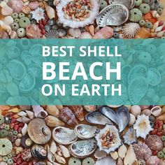 The Best Shell Beach Ever