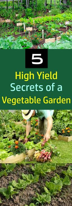 Love growing your own vegetables? These 5 high yield vegetable garden secrets will help you to increase the productivity of your garden #gardeningorganic