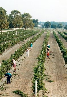 Nassau Valley Vineyard : : : Delaware's First and Only Award Winning Winery