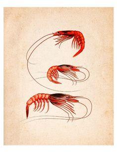 Red Shrimps Vintage Illustration Wall Decor by SeashoreDecors, $9.95