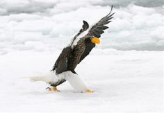The+Flasher+by+Harry++Eggens