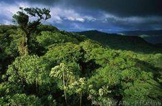 Cloud Forest Reserva Santa Helena, Costa Rica, Urwald