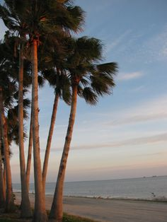 Dunedin is one of the most artistic communities that you will get to experience, and one that has lots of things to do. Honeymoon Island, Clearwater Beach, Going On Holiday, Holiday Wishes, Early Morning, Palms, Painting Inspiration, Things To Do, Art Ideas