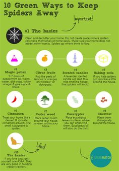 How to get rid of mice fast without poison how to health beauty pinterest more how to - Keep ants away in simple ways ...