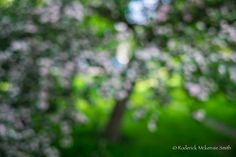 Out of focus Blur Image Background, Background Images For Editing, Picsart Background, Background For Photography, Photoshop Hair, Hd Background Download, Edit Your Photos, Out Of Focus, Nature Wallpaper
