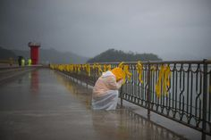 Saturday 3 May 2014  A mourner weeps by yellow ribbons at Jindo harbour where relatives of the missing from the Sewol ferry disaster are still waiting for developments in the grim search and recovery operations (...) - Credit: Ed Jones/AFP