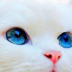 (notitle) - Adorable Cats and Cute Kittens - Katzen Pretty Cats, Beautiful Cats, Animals Beautiful, Most Beautiful Eyes, Amazing Eyes, Pretty Kitty, Cute Funny Animals, Cute Baby Animals, Funny Cats