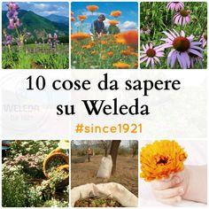 10 cose da sapere su Weleda - BabyGreen
