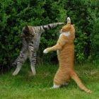 kitty karate