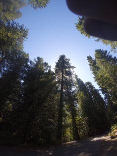 Willamette National Forest, along the McKenzie River, Oregon