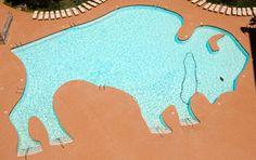 Swimming pool:  Buffalo shaped swimming pool