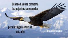Cuando hay tormenta los pajaritos se esconden, pero las águilas vuelan más alto #frases #robertoyelva