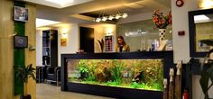 The aquarium reception desk at the entrance of the hotel.  Looks cool!