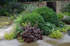 Buxus ball and Heuchera Palace Purple, surrounded by York stone paving, designed and installed by Fork Garden Design