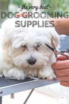 Thinking about grooming your dog at home? Or maybe you want to start a semi-professional dog grooming biz? Either way, there are a few key tools you'll need - check Dog Grooming Tools, Grooming Shop, Dog Grooming Supplies, Dog Supplies, Dog Grooming Styles, Havanese Grooming, Puppy Grooming, Havanese Haircuts, Dog Clippers