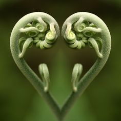 La magie de Fibonacci dans la nature, les maths de Dieu … The magic of Fibonacci in nature, the maths Heart In Nature, Heart Art, I Love Heart, My Heart, Fern Frond, No Photoshop, Belleza Natural, Sacred Geometry, Amazing Nature
