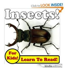 Insects! Learning About Insects - Insect Photos And Facts Make It Fun! (Over 45+ Pictures of Different Insects)