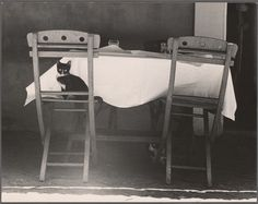 Cat in Parisian Restaurant, Paris From New York Public Library Digital Collections.