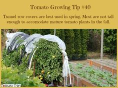 Floating Row Covers and Tunnel Row Covers for Protecting Tomatoes Tomato Growing Tip tunnel row covers are best used in spring to protect tomato plants before they get too large. With Tomato Dirt. Growing Tomatoes From Seed, Growing Tomatoes In Containers, Grow Tomatoes, Pruning Tomato Plants, Tomato Seedlings, Tomato Garden, Tomato Tomato, Tomato Salad, Best Tasting Tomatoes