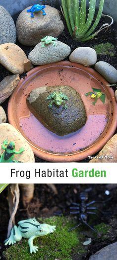 20 awesome frog habitat images frog habitat fish tanks aquarium rh pinterest com