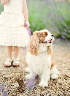 Cavaliers are the most precious dogs.