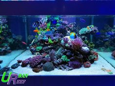 Aquarium récifal chez Urban Reef Corals - 2000 l - Récifal News Aquarium Marin, Saltwater Aquarium, Aquariums, Reef Tanks, Urban, Nature, Jar, Animaux, Naturaleza
