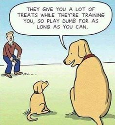 Train your dog WITHOUT treats! Learn more: https://www.animalhub.com/training-without-dog-treats/