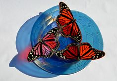 Monarch Butterfly Bowl by Mark Ditzler: Art Glass Bowl available at www.artfulhome.com