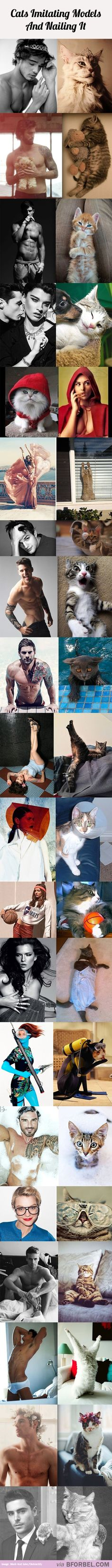 20 Cats Imitating Models And Nailing It…