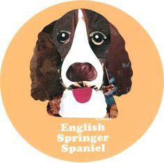 マイ @Behance プロジェクトを見る : 「009 | English Springer Spaniel」 https://www.behance.net/gallery/42195029/009-English-Springer-Spaniel