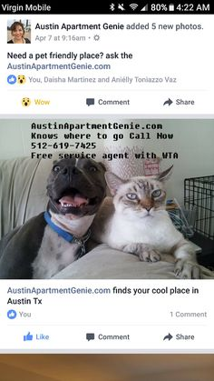 Austin Apartment With No Dog Restriction Ask The Austin Apartment Genie  Free Service Locating Austin Apartment