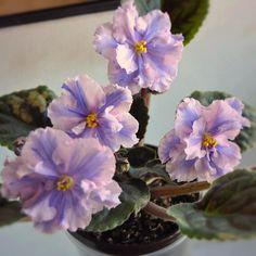 Scetch Artist, первое цветение