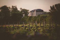 Stéphane Gabart - Portraits de vie - La vigne et le vin