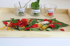 Help preschoolers identify parts of a flower with this hands-on lesson! This sensory-rich lesson also has options to extend learning with other activities!