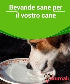 Bevande sane per il vostro cane Love Pet, I Love Dogs, Shih Tzu, Baby Dogs, Pet Dogs, West Terrier, Animals And Pets, Cute Animals, Pet Health