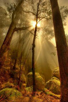 Naturbilder: schöne #Naturbilder #Natur #Wald #SinndesLebens #derSinndesLebens