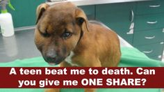 This sweet, gentle 6-month-old cross-breed puppy had her life cut short as a result result of a sickening and cowardly attack...