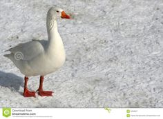 Its Cold Outside, Birds, Animals, Baby, Animales, Animaux, Bird, Infants, Animal Memes