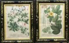 Lot: Johann W. Weinmann (German, 1683-1741)- Etchings, Lot Number: 0219, Starting Bid: $100, Auctioneer: Auctions at Showplace, Auction: Estate Auction, October 16, Date: October 16th, 2016 PDT