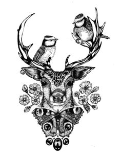 Nina de Yorke '14 - Woodland Roe Deer