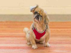 www.PetHarbor.com pet:VERO.A093907