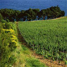 Sea view vineyard in Croatia