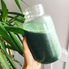 Because it's green day errryday over here.  Strawberry-Kiwi-Banana-Cilantro-Spirulina-Natural Calm  Magnesium {orange flavoured} with water base : Yes cilantro. If you enjoy cilantro try it in a smoothie with strawberries. Delicious   detoxifying. #eatwithstacey #greensmoothie #favouritefruits #cilantro #spirulina #magnesium