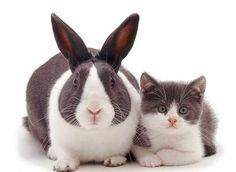 Gato y conejo que parecen hermanos gemelos