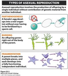 plant reproduction worksheet - Google Search