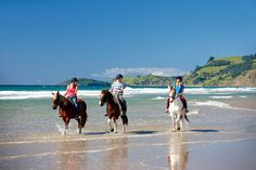 MATAKANA AREA BEACH - PAKIRI BEACH, NZ - A number of our overseas guests love the fact that you can ride a horse along a beach - especially one as expansive as Pakiri - its magic!  Horse Riding Pakiri Beach