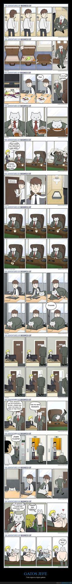 Así sería tu jefe si fuera un gato - Todo sigue su lógica gatuna