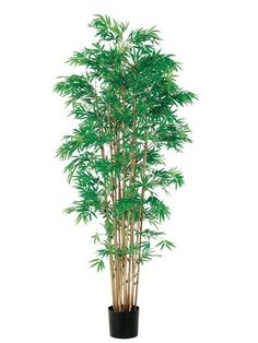 6' Japanese Bamboo Tree x15 w/3360 Leaves in Pot Two Tone Green >>> For more information, visit image link.